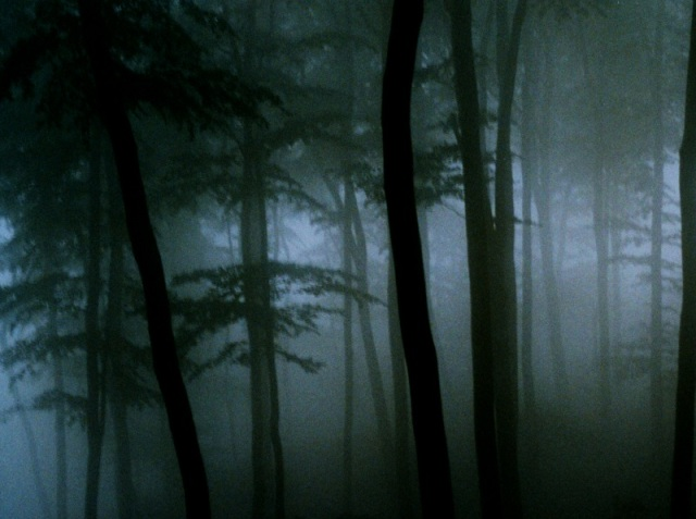 Spooky_Forest_by_lichtdieb