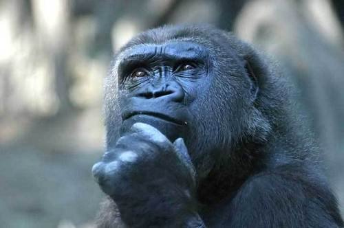 Thoughtful-monkey