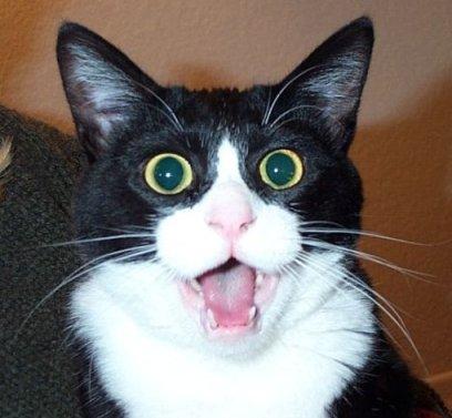 CAT-SHOCKED