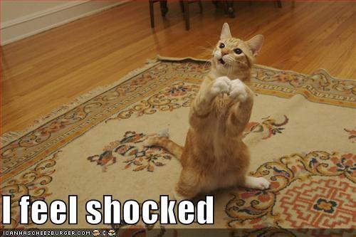 shocked-cat