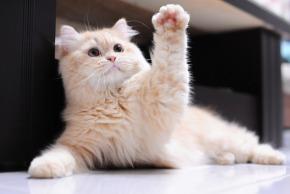 High 5 Cat