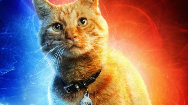 new-captain-marvel-tv-spot-highlights-a-funny-scene-involving-goose-the-cat-social.jpg